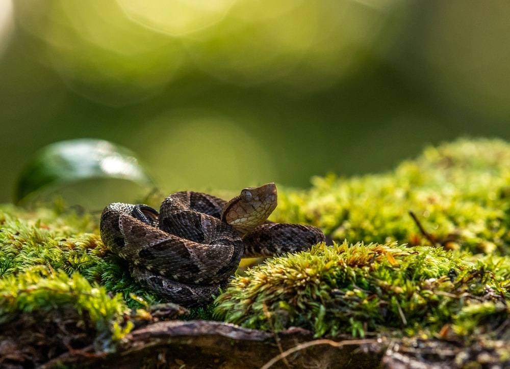 brown snake on grass