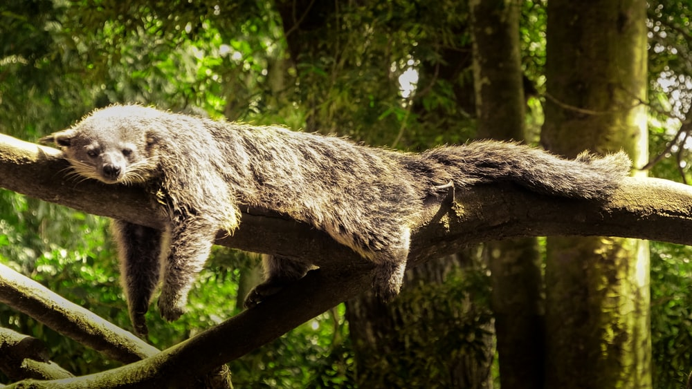brown animal on tree branch