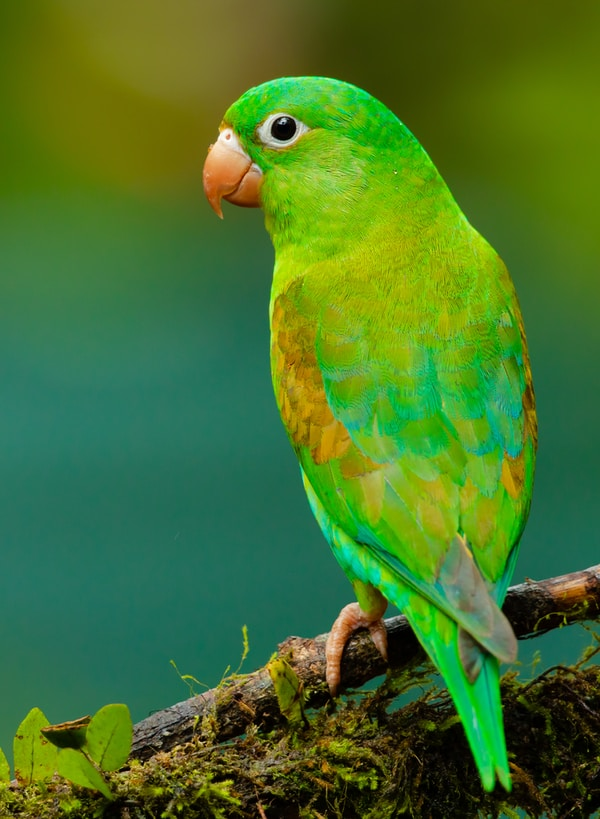 green and yellow small beaked bird on twig