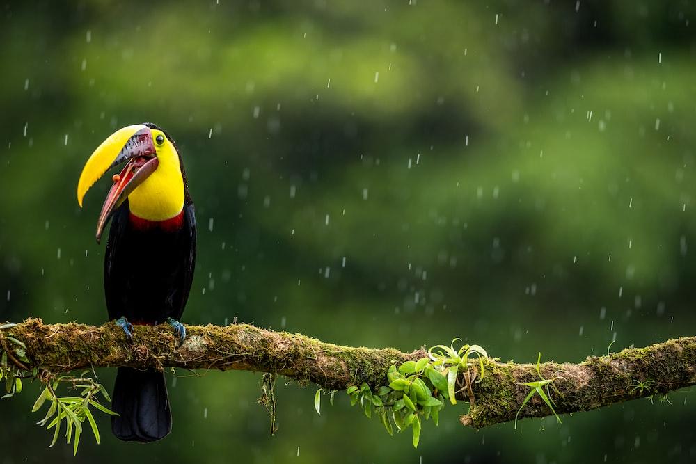 black and yellow bird perching on tree branch