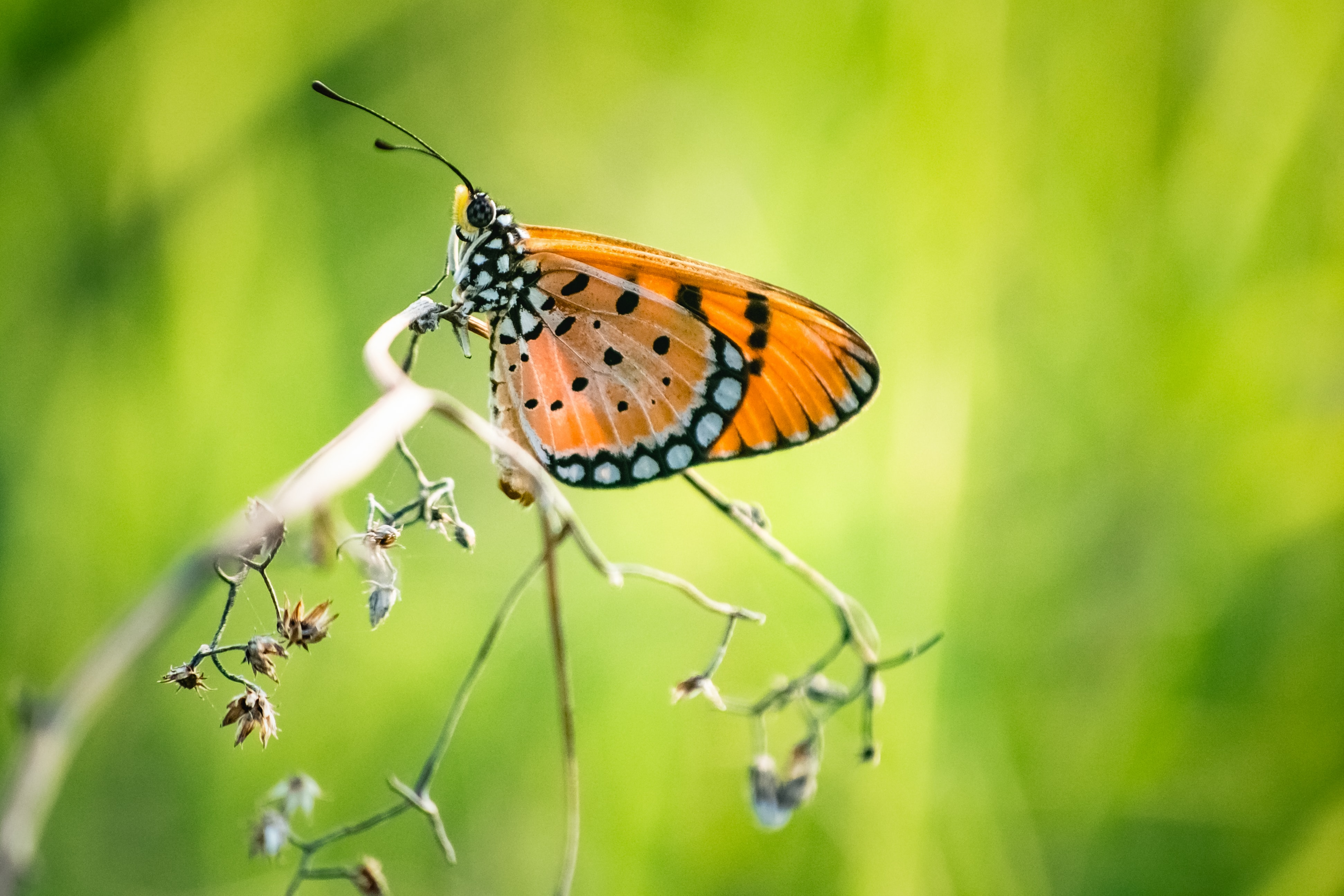 selective focus photography of orange and black morpho butterfly on twig during daytime