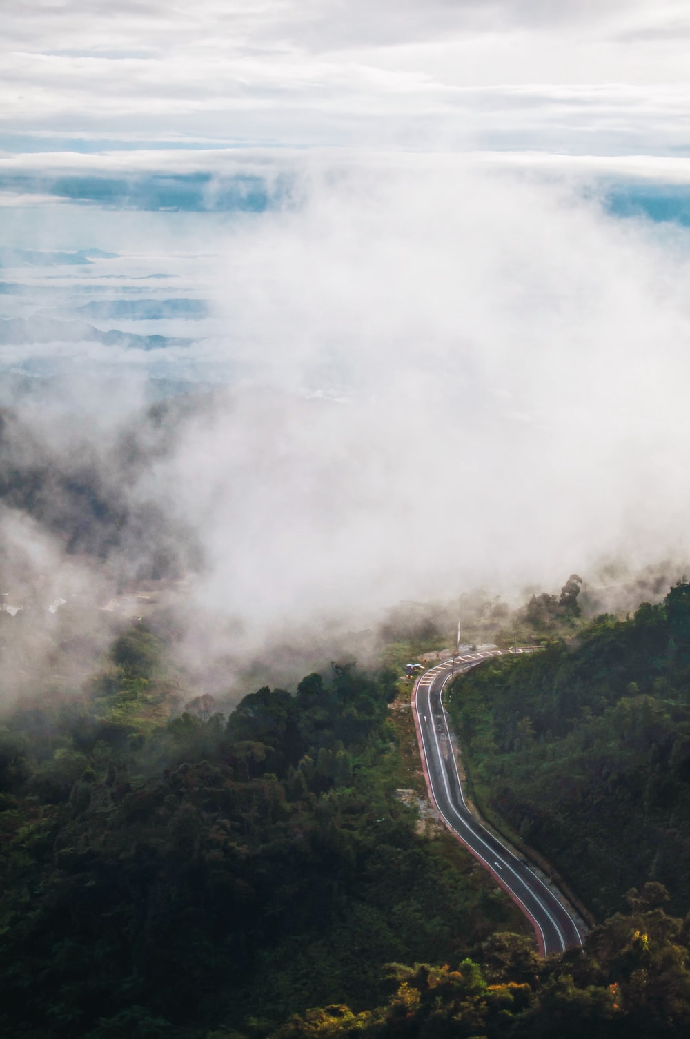 aerial photography of road surrounded with trees