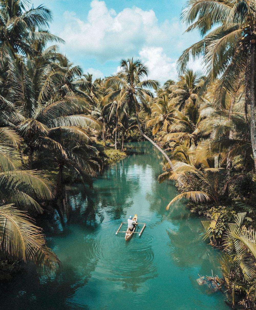 green palm tress
