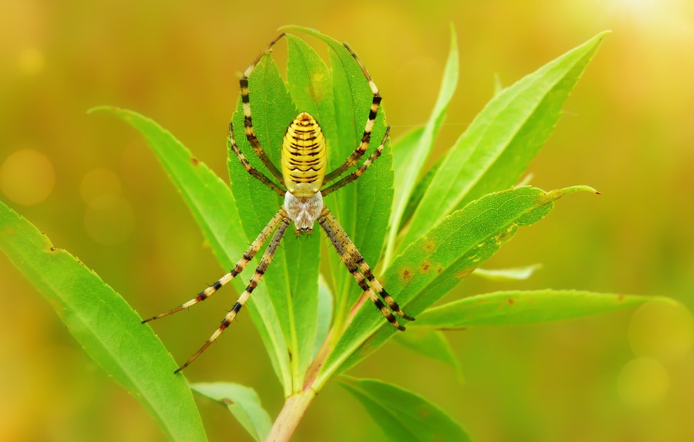 brown and black spider on green-leafed plant during daytime