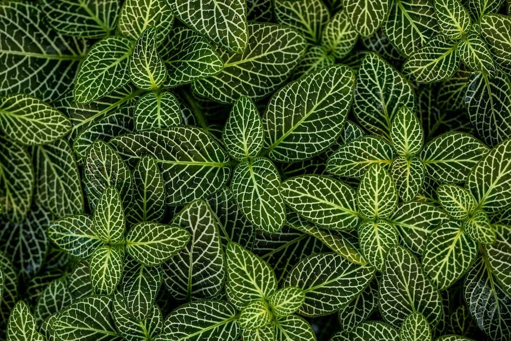 macro photo of green-leafed plants