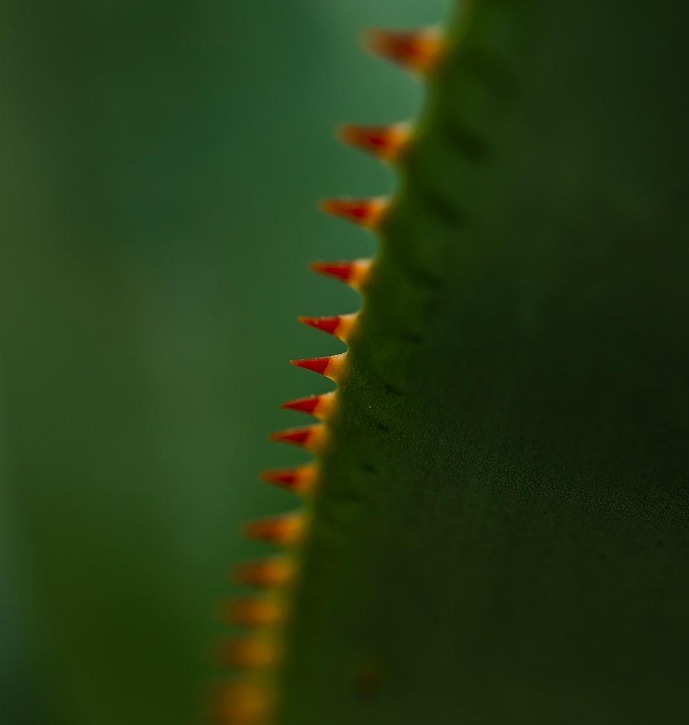 cactus plant close-up photography