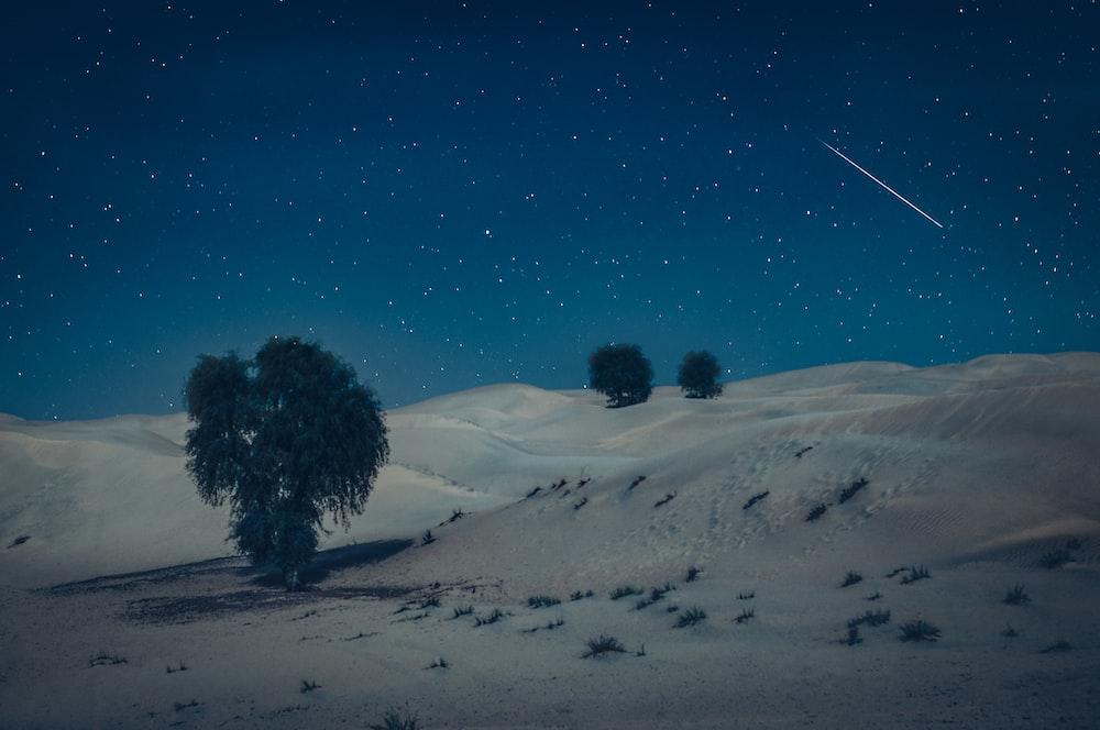 green tree on desert during nighttime