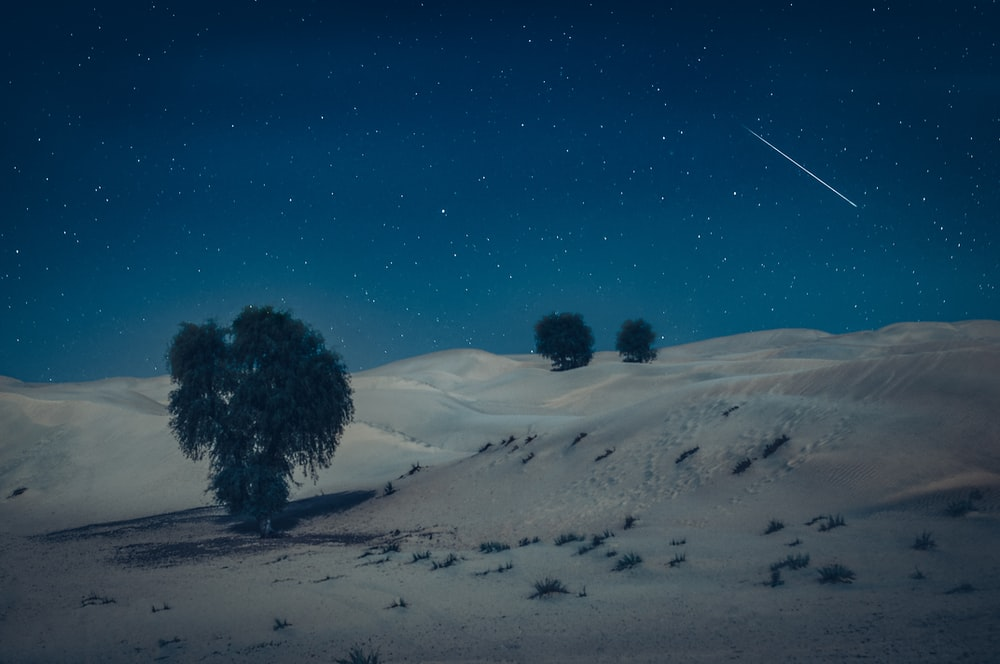 green tree on desert during nighttime