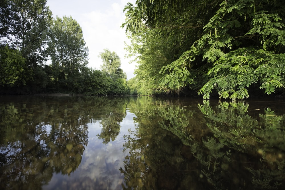 body of water surrounded with green trees