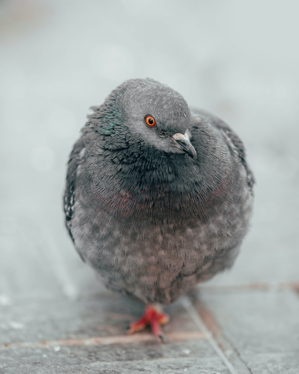 selective focus photo of pigeon