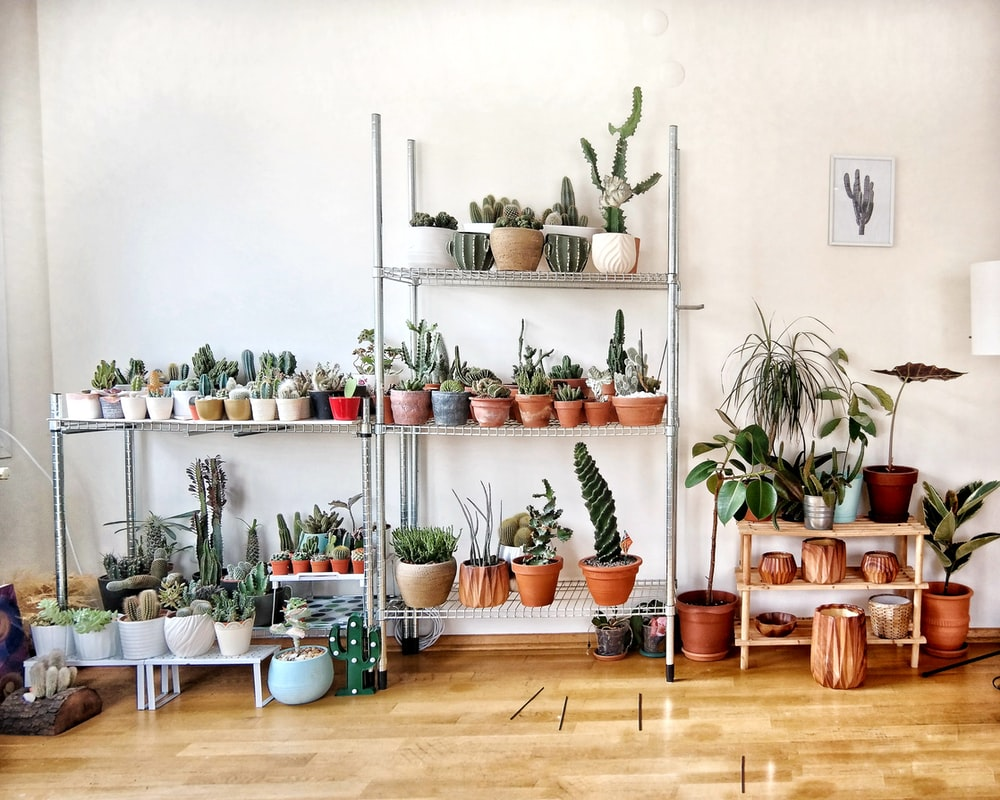 pile of cactus plants in front of white wall