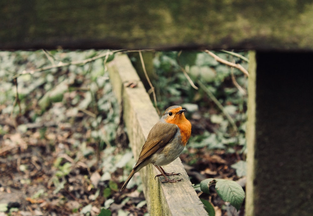 focus photography of black and orange bird on beam