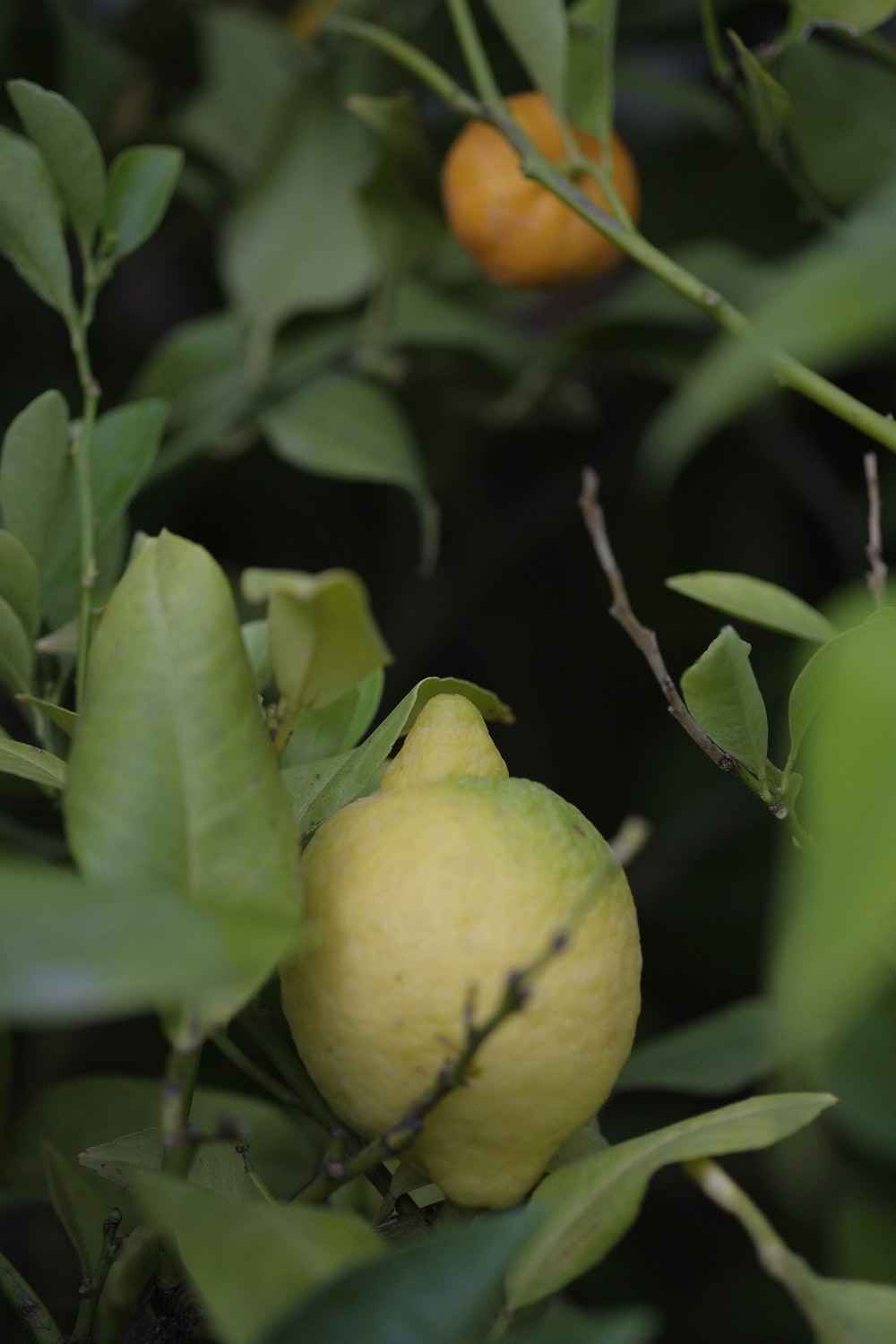 close-up photography of lemon