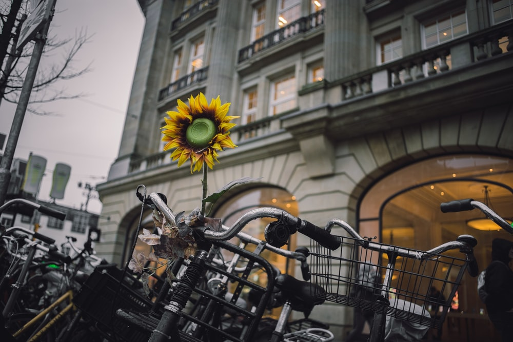 bikes parked in front of building