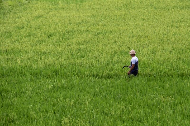 man in a rice field