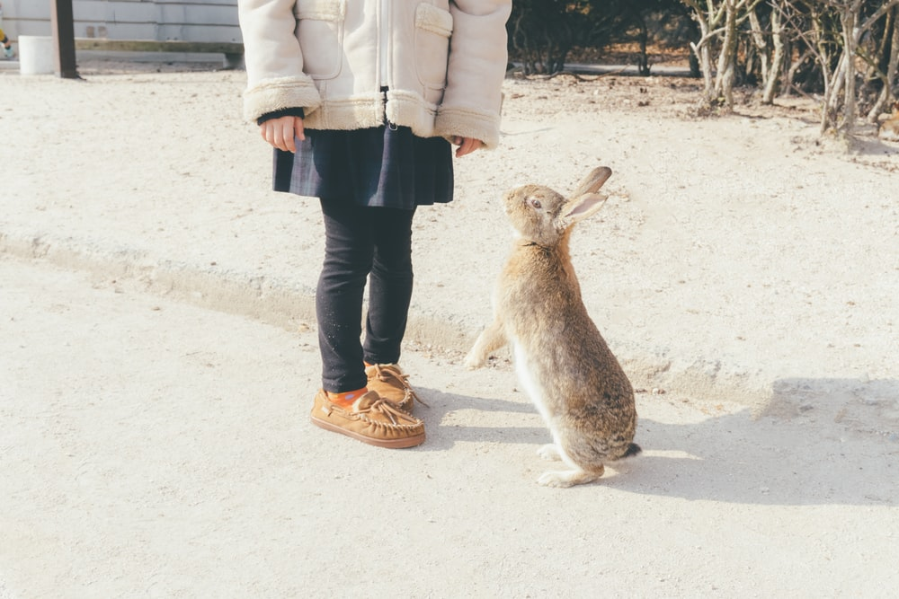 rabbit about to stand in front of toddler