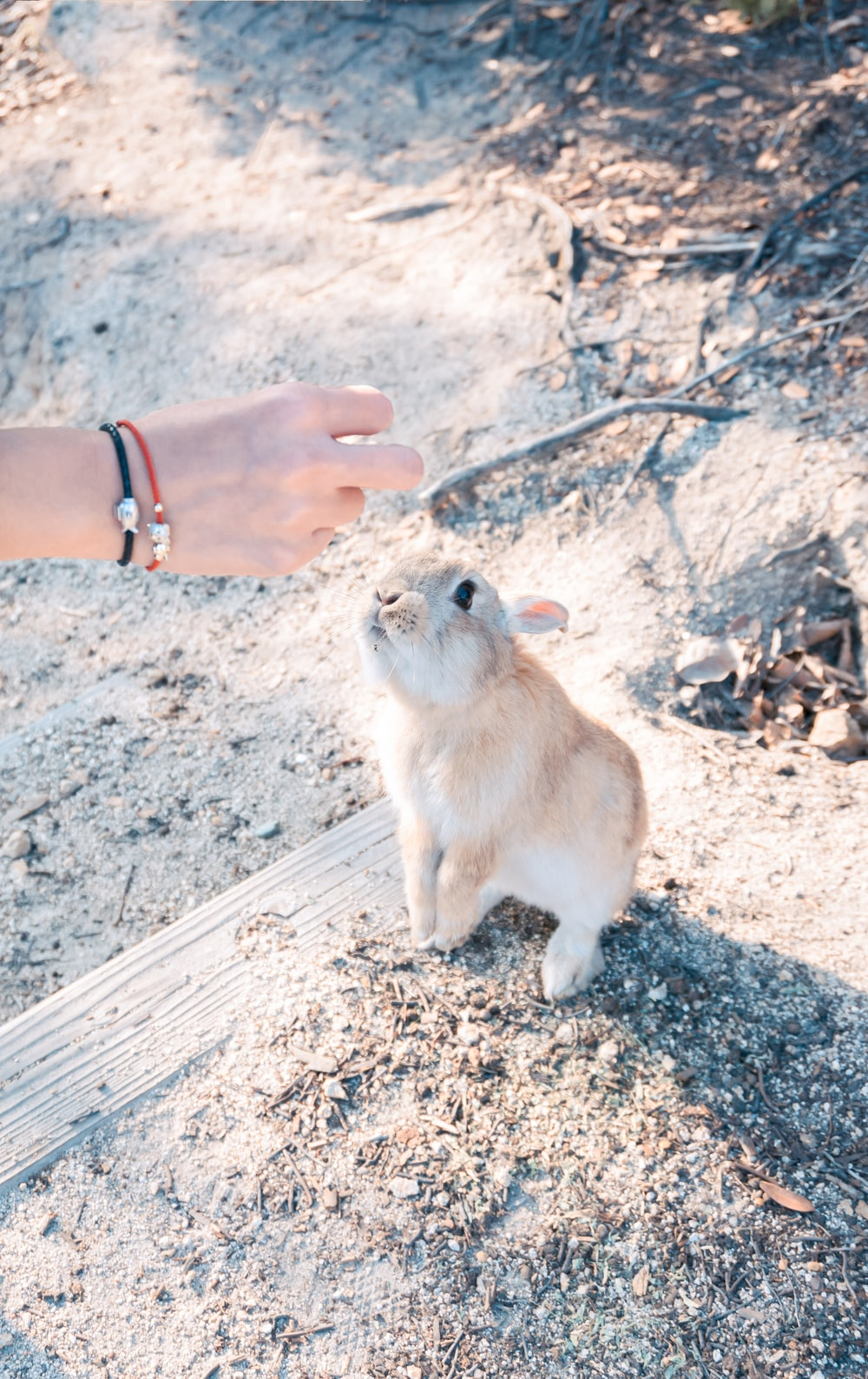 beige bunny near person righ hand