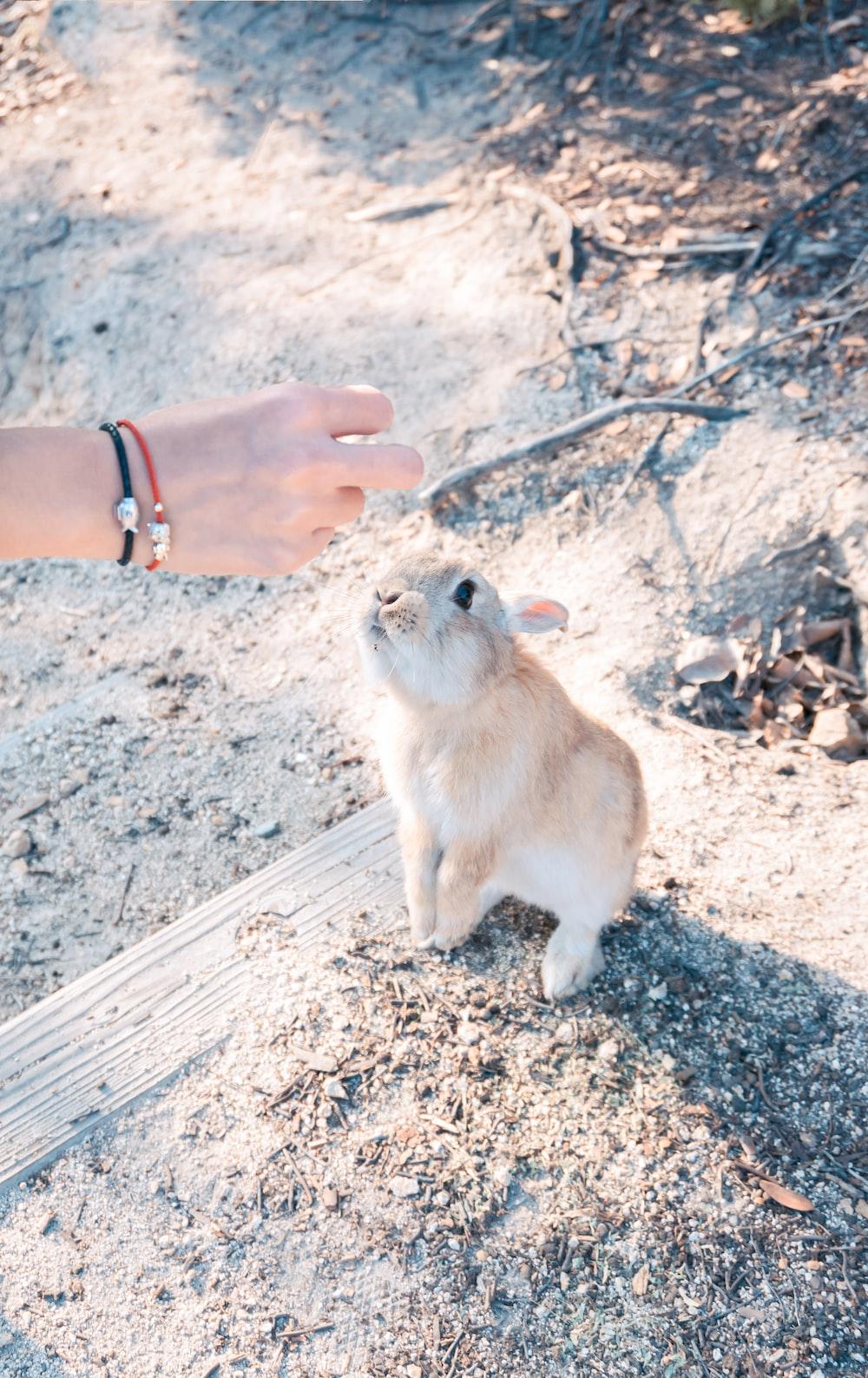 beige bunny near person righ hand
