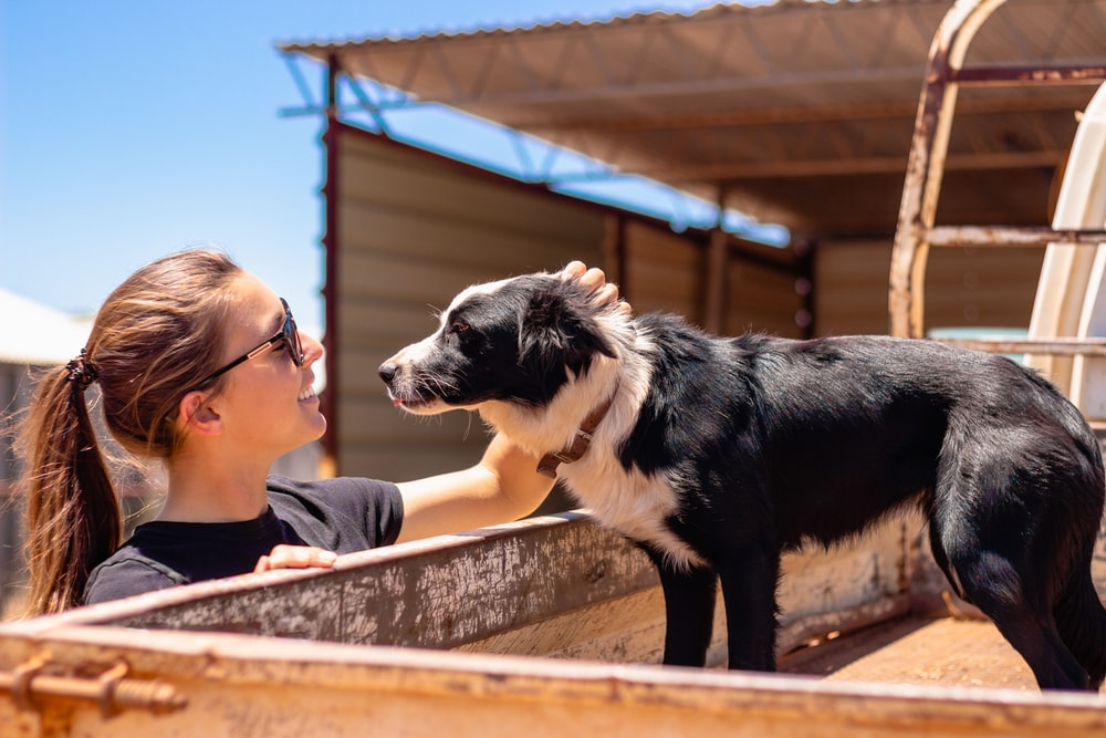woman facing on short-coated black dog outdoor
