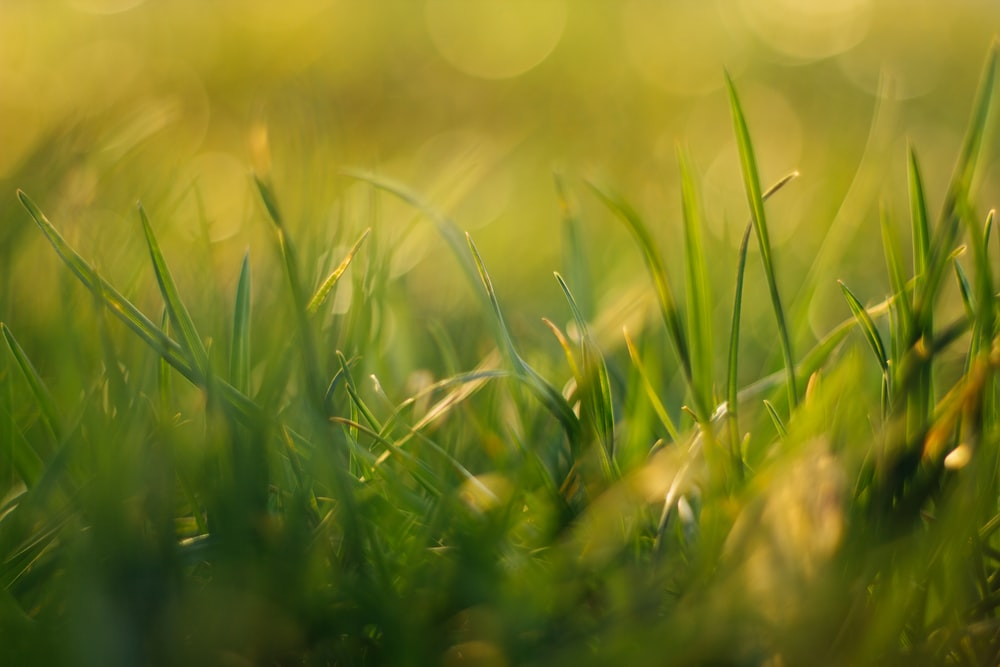 green grass field during daytime close-up photography