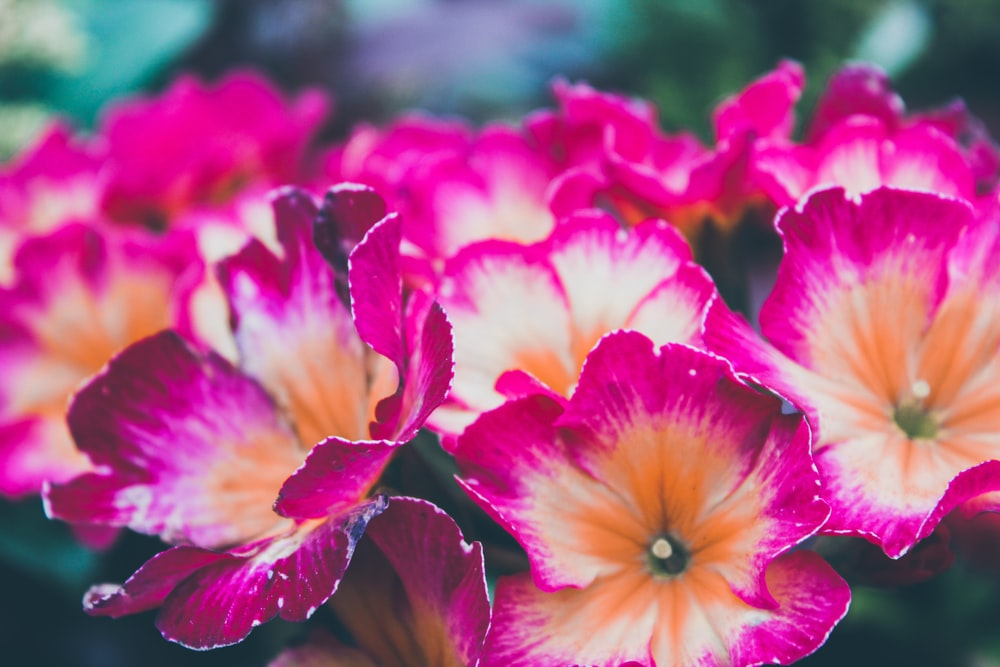 pink-and-orange-petaled flowers