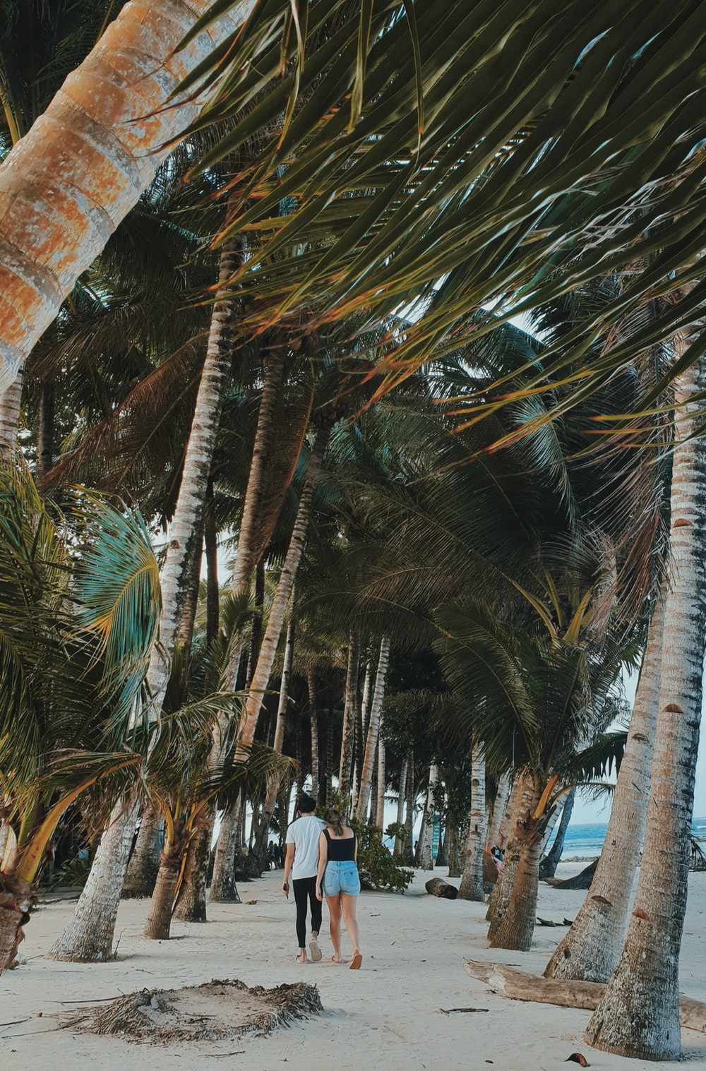 person walking under palm trees