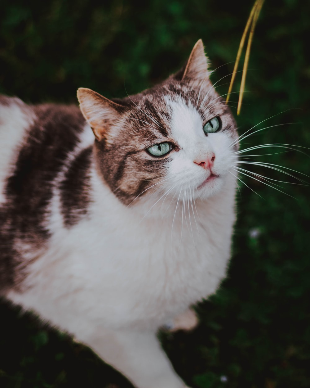 view of short-haired brown and white cat