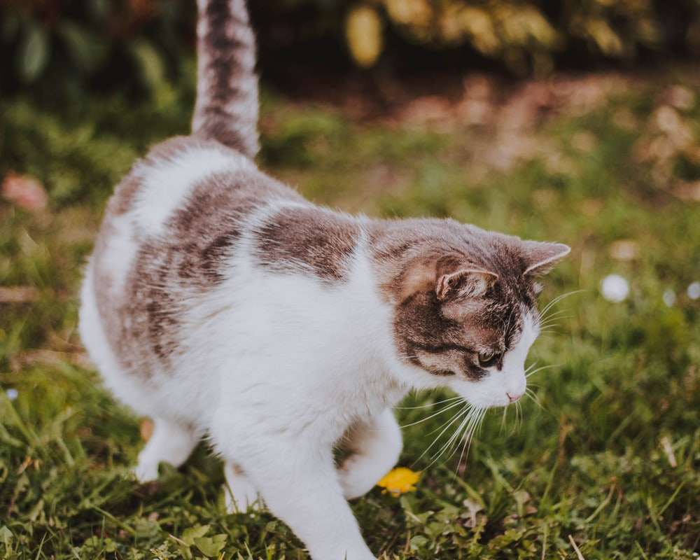 close-up photography of cat standing on grass