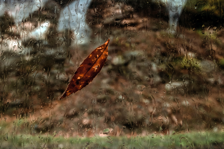 brown leaf on wet glass