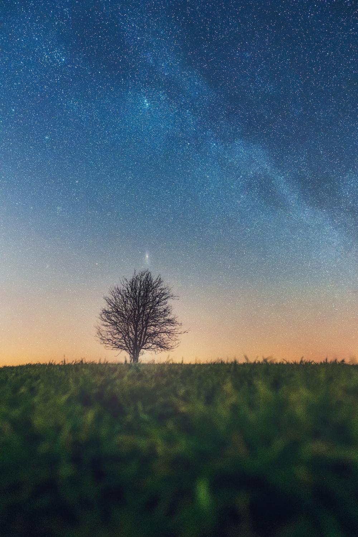bare tree on grass field