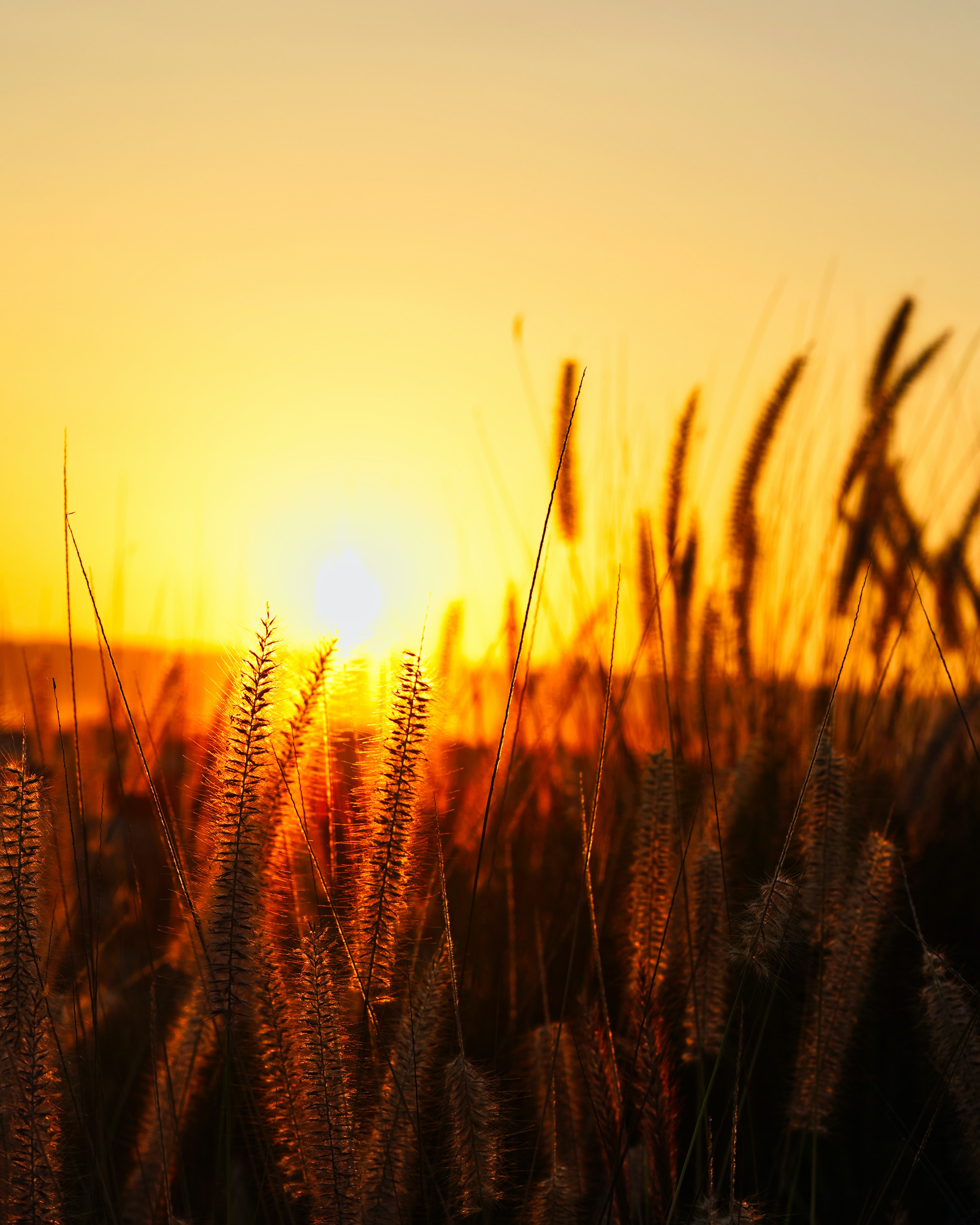 brown tall grass during sunset