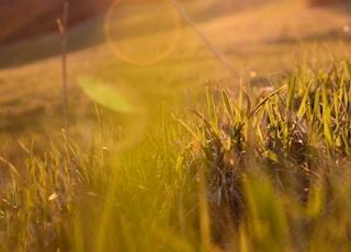sun rays on green grass field