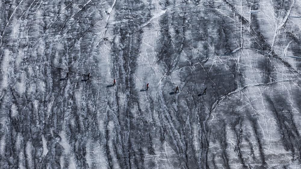 flight of bird near gray rock formation