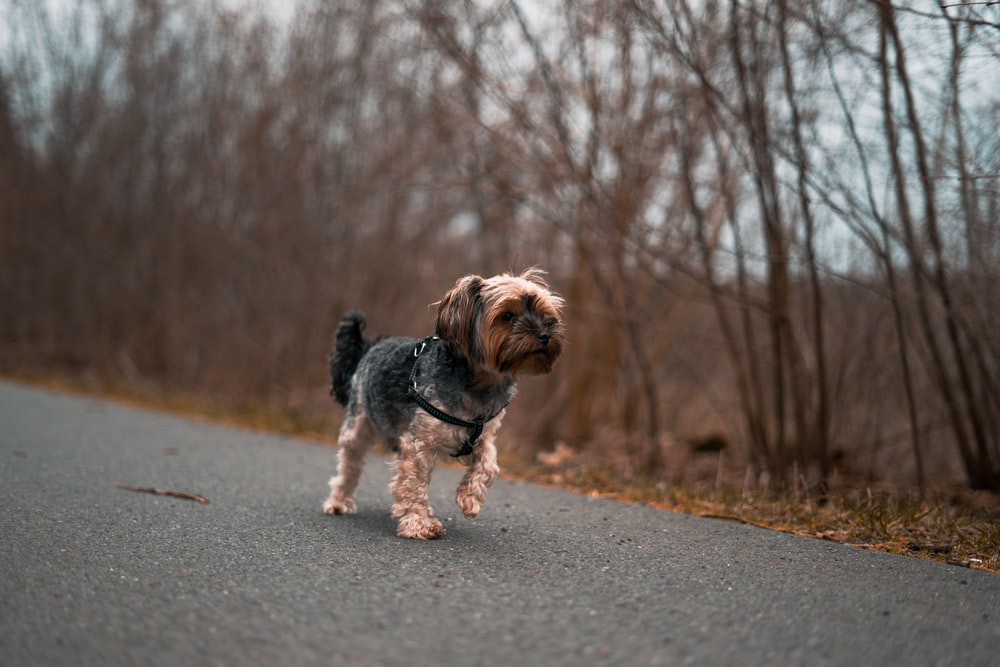 long-coated brown and black puppy on road