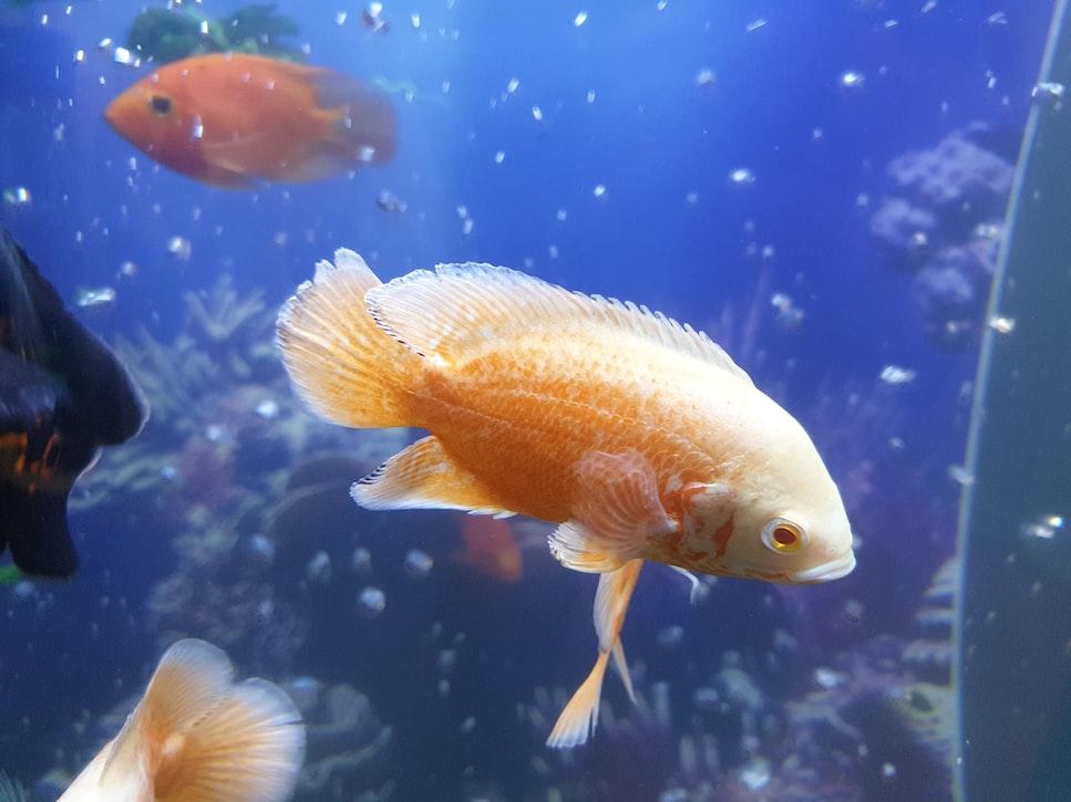 Aquatic lives of Kerala