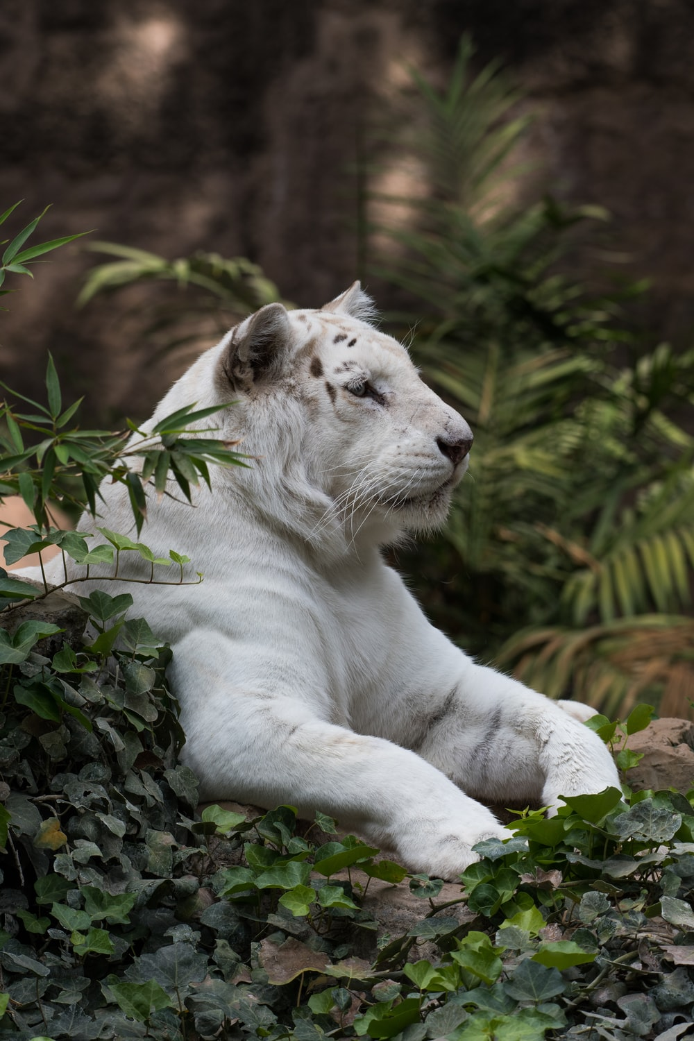 white lion sitting on green-leafed plants