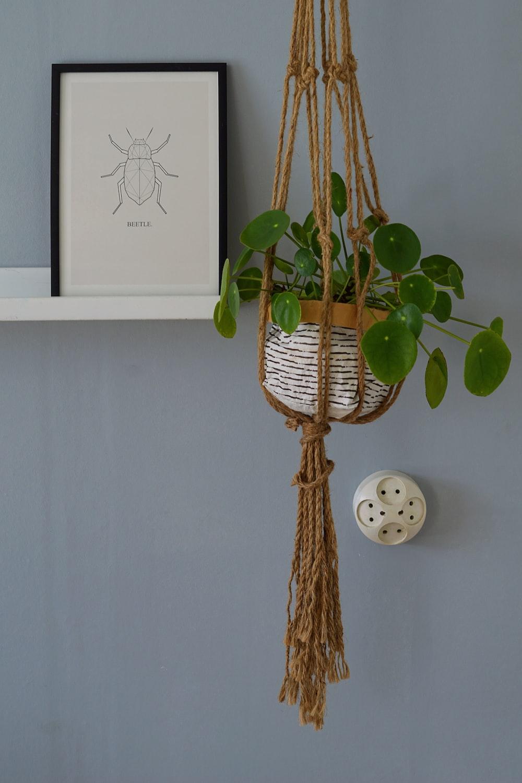 green ivy plant hanged near gray wall
