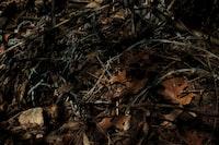 Thorns & Needles