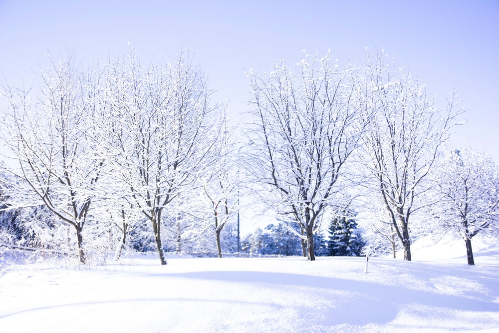 snow and bare tree covered field