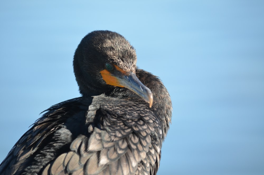 black bird facing sideways