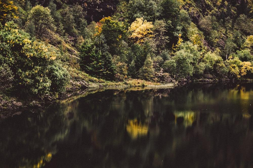 body of water near green trees