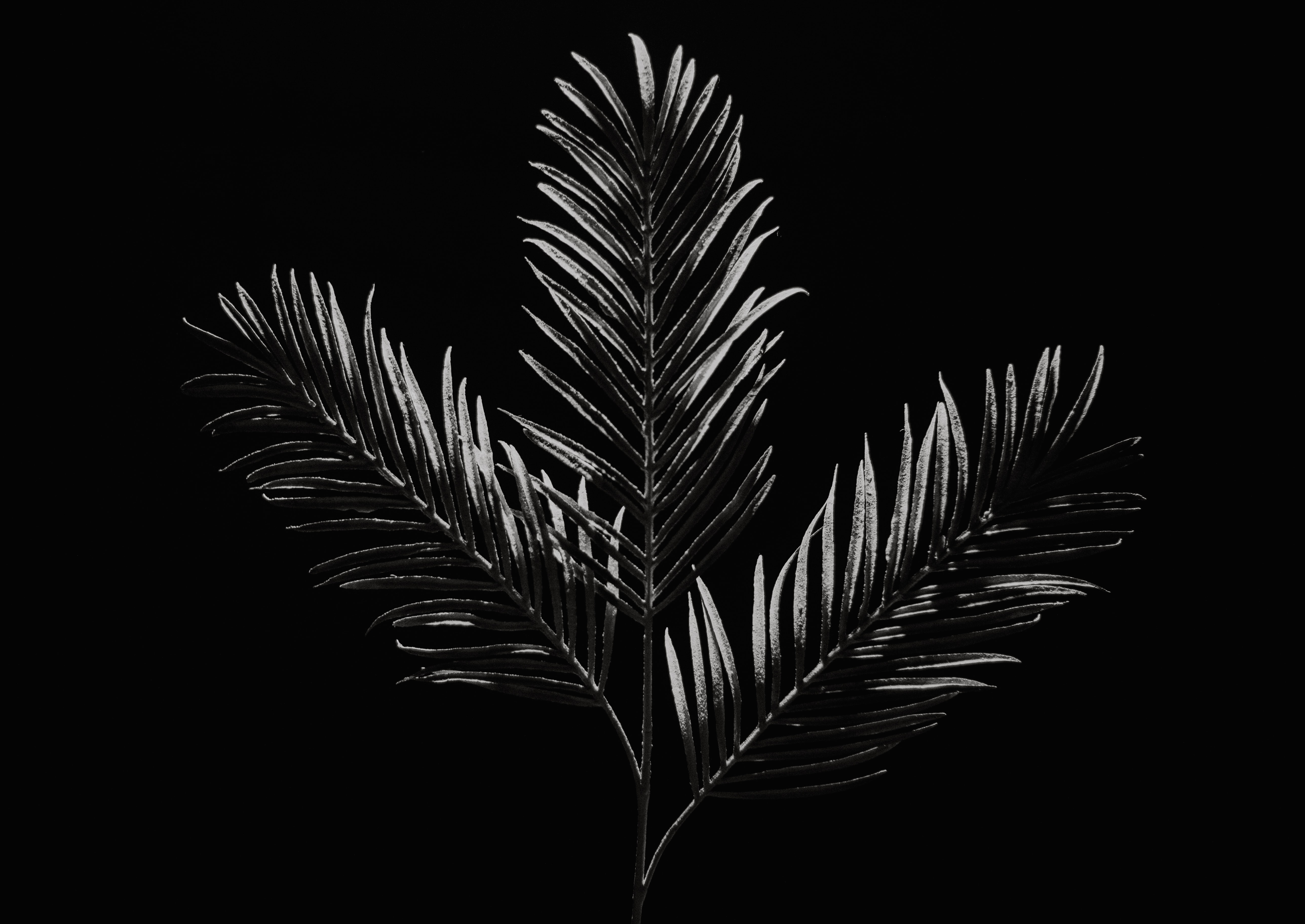 grayscale photo of palm tree