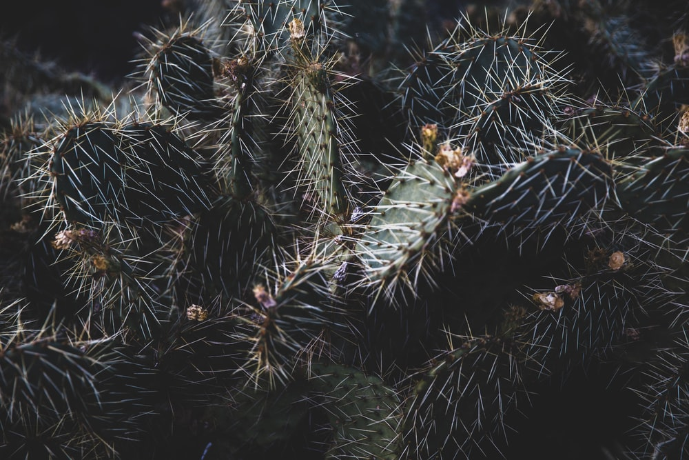 green cactus plants during night time