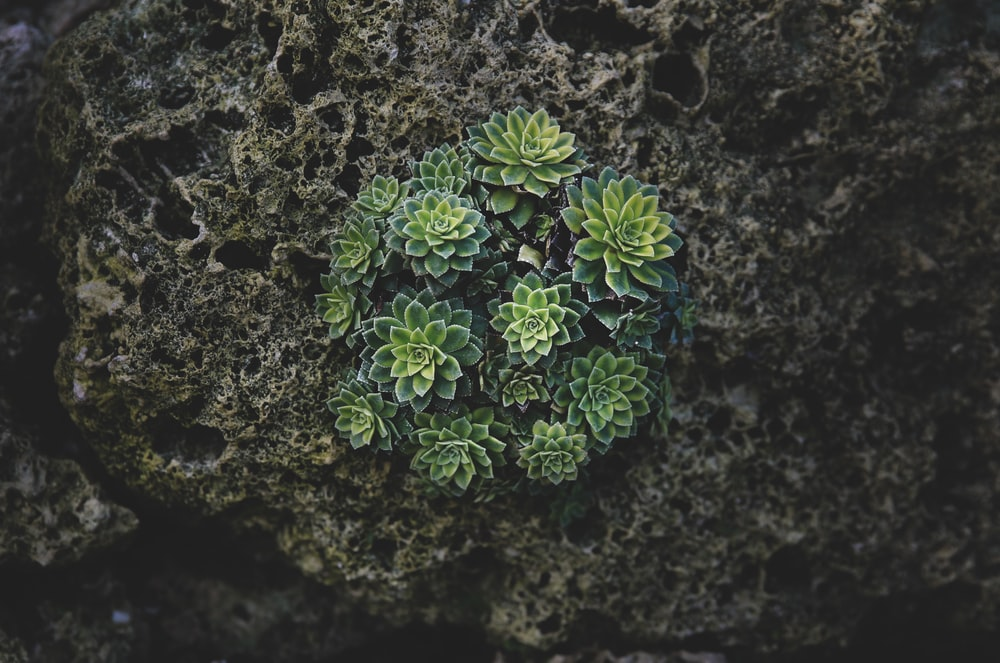 close-up photography of succulent