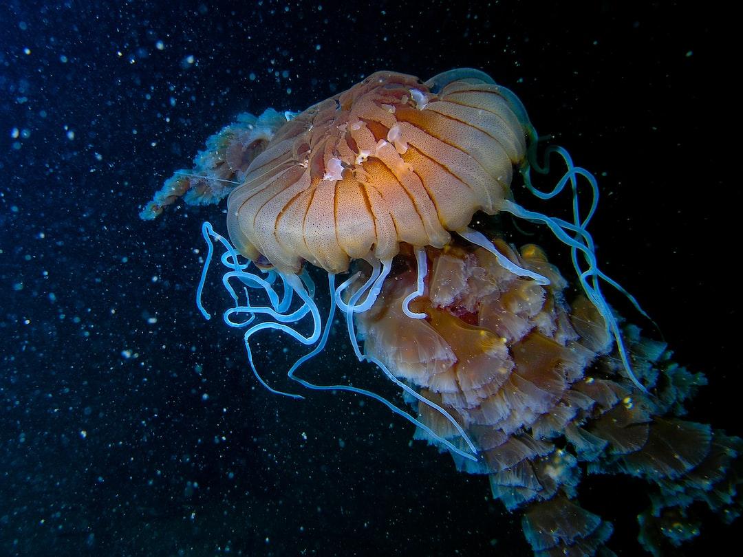taken at 40m depth