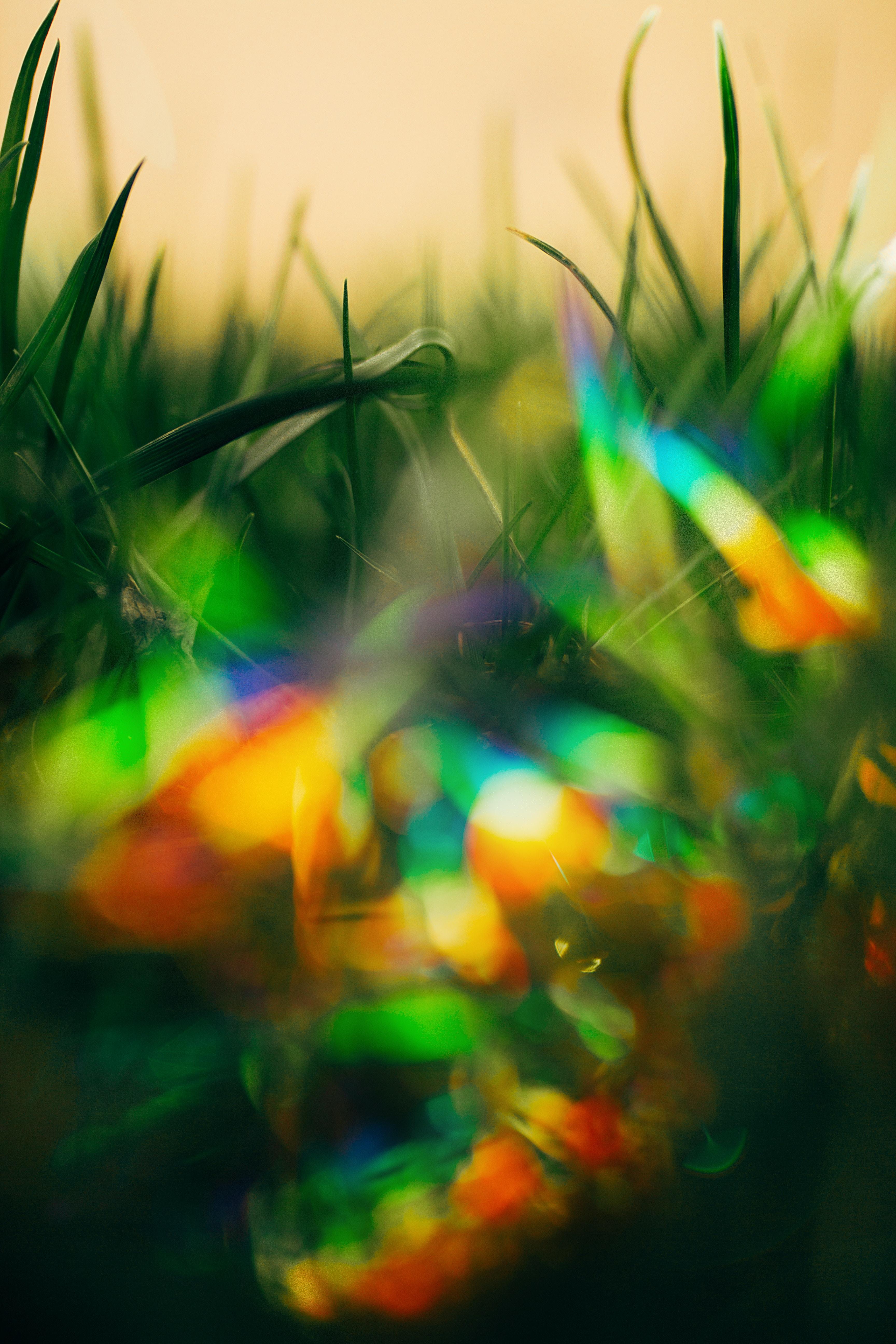 bokeh photography of green grass