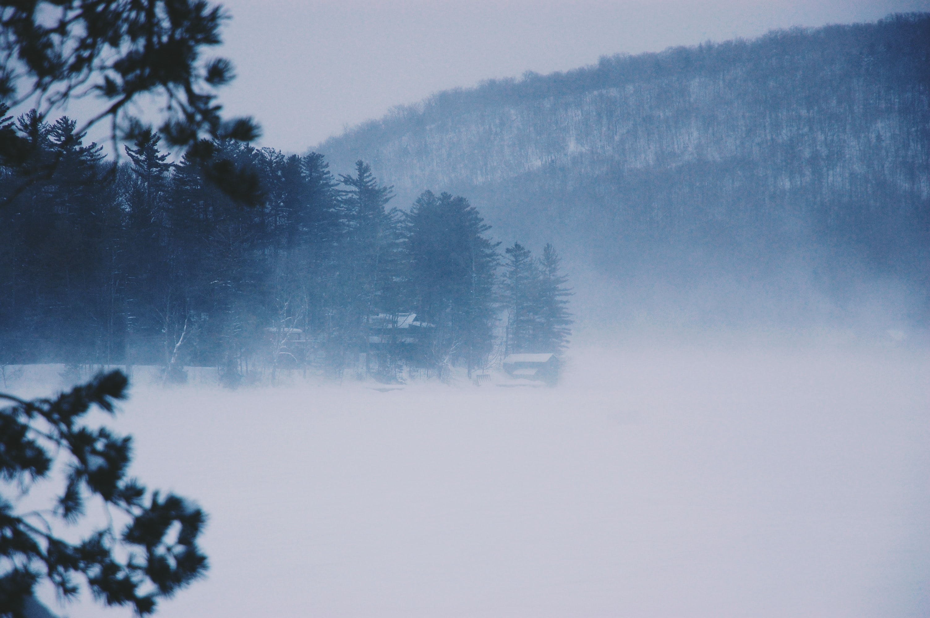 fogs surrounding forest during daytime