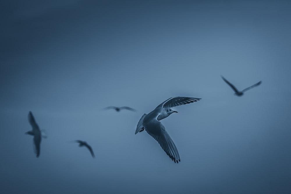 white birds during daytime