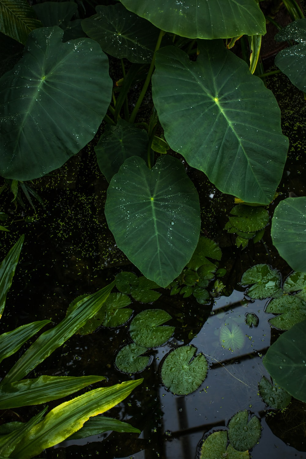 green-leafed plant near body of water