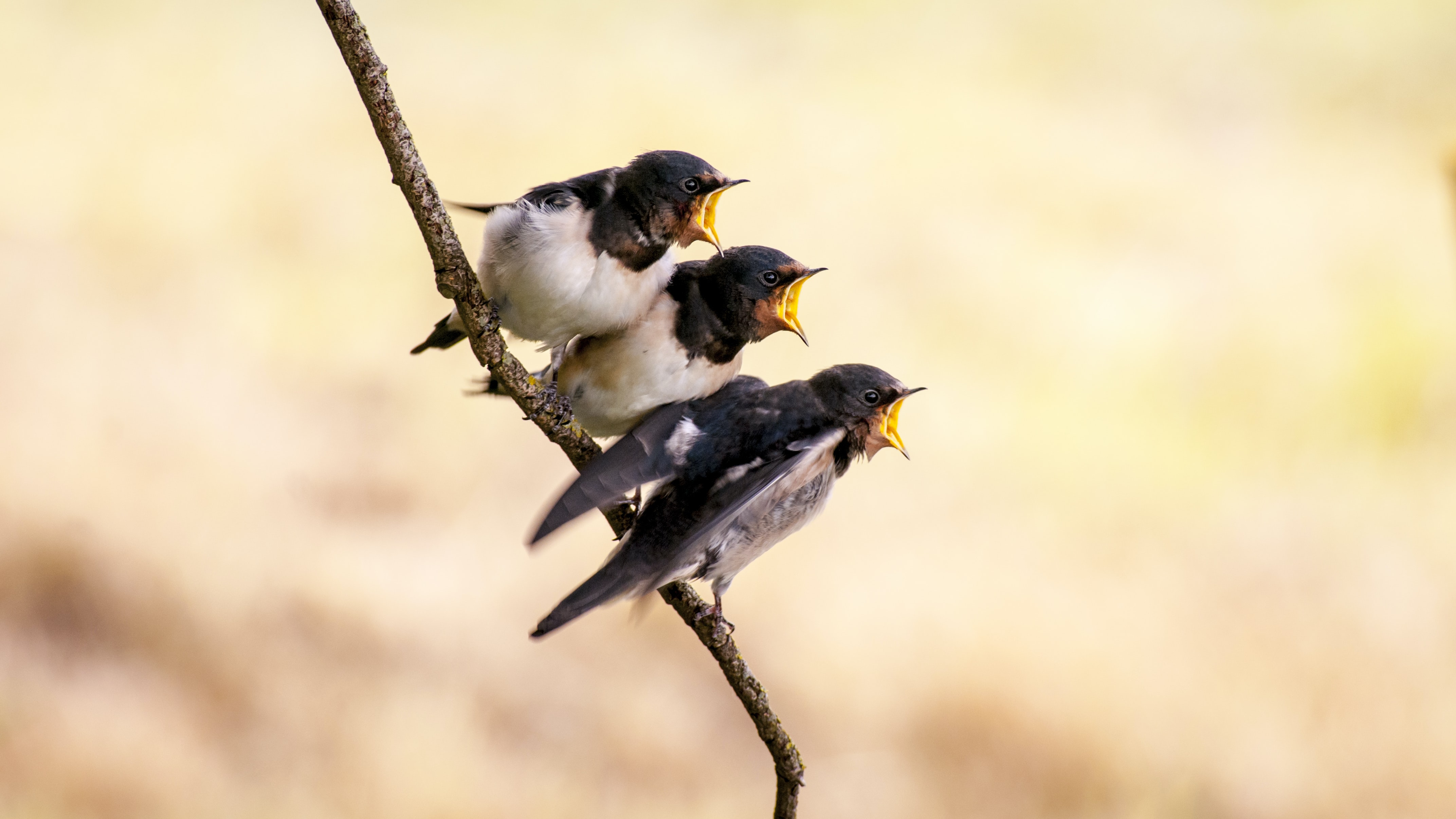 three white and black birds on branch